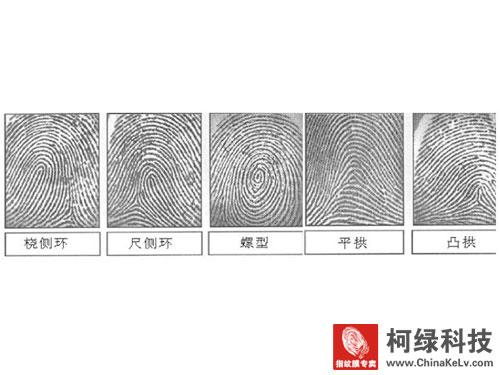 指纹类型的出现规律
